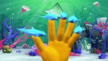 Dolphin Finger Family Rhymes | Sharks Twinkle Twinkle Little Star Nursery Rhymes And Sea Animals