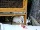Les lapins du voisin - 26-08-2007 (5)