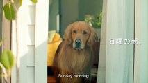 Amazon Prime Commercial _Lion_ (Japan)