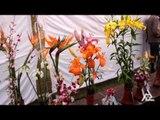 ROSE FESTIVAL | FLOWERS EXHIBITION | ZAKIR ROSE GARDEN CITY BEAUTIFUL CHANDIGARH | PART - 3