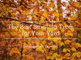 Southeastern Growers - The Best Smelling Trees For Your Yard