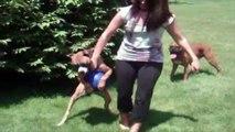 Ha ha. La maîtresse confisque la balle du chien, mais ce que ce dernier fait vous fera mourir de rire !
