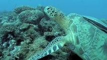 """""""Because the Océan"""" : protéger l'océan c'est lutter contre le dérèglement climatique"""