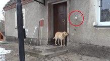 Vuole rientrare in casa ma nessuno le apre: Guardate la sua intelligenza dove arriva!