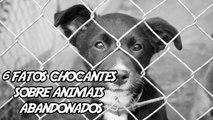 6 Fatos Chocantes(que nunca te contaram) sobre Animais Abandonados