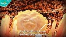Pampers® - Votre grossesse #1 – L'aventure commence (la fécondation)