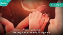Pampers® - Votre grossesse #3 – La grossesse se fait sentir (semaines 10 à 15)