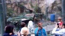 Un petit selfie avec un tigre blanc... Attention à l'attaque du félin!
