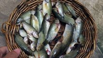 Village Food - Fried a Little Fish - How To Cook a Little Fishes - Cambodian Traditional Food