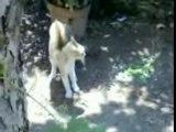 Incredibile!Cane Contro Gatto ma perde il cane!by Erny(SA)