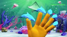 Sea Animals Finger Family Nursery Rhymes | Killer Whale Shark and Dolphin Finger Family Songs