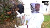 Trois ruches installées dans le collège Chape à Marseille