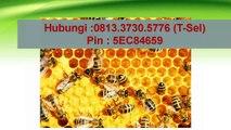 081.33.730.5776 (T-Sel) - Madu Vitabumin