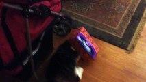 Ce chat à la tête coincée dans une boîte de mouchoirs lol