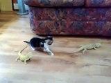 Un chat joue avec deux bébés lézards