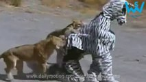 People in Zebra suit attacked by Lions