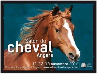 Salon du cheval d'Angers 2016 : le salon