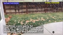 Dog Experiences First Snowfall