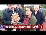 Yaraları sarılıp doğaya bırakılan Baykuş Kartal ve diğer kuşlar