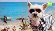 Ella Bean The Fashionista Dog: CUTE AS FLUFF