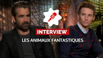 LES ANIMAUX FANTASTIQUES : de quels pouvoirs magiques rêvent Eddie Redmayne et Colin Farrell ?