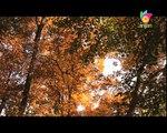 Sawariya Ghat Mahi | Baje Anhad | Prem Rawat Maharaji Bhajan