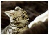 Chats effrayés