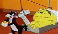 Funny episodes cartoon Tweety and Sylvester - A street cat named sylvester   Funny episodes