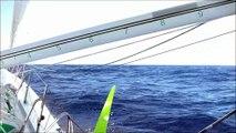 J22 : Un magnifique spectacle de baleines pour accueillir Morgan Lagravière / Vendée Globe