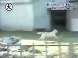 Dog is faith full animal          Dillagi (Every Saturday on ARY Digital) ... Mann Mayal (Every Friday on Hum TV) ... Abro (Every Sunday on Hum TV) ... Bheegi Palkein (Every Friday on Aplus) ... Mein Sitara (Every Thursday on TV ONE) ... Tum Kon Piya (Eve