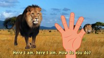 Finger Family Finger Family Daddy Finger Lion Savane Animal The Lion King Cartoons Kids Nursery