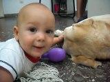 Bebe juega con Labrador