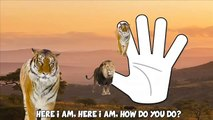 Finger Family Wild Animals Lion Tiger Elephant Daddy Finger Nursery Rhyme Song For Kids 1