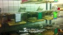 Expérimentation animale: l'incroyable infiltration de GAIA dans un laboratoire bruxellois