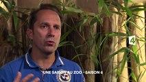 Une saison au zoo, Saison 6 - Plan d'urgence pour une girafe