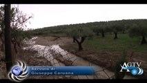 Produzione delle arance a rischio a Ribera, la Regione dichiara lo stato di calamità News Agtv