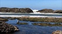 New Zealand Earthquake Raised the Seafloor 2 Meters