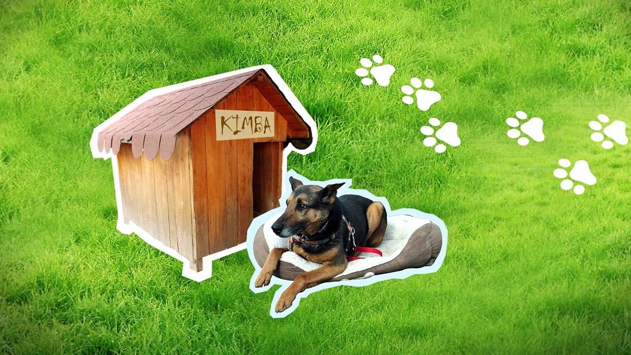 Ocenia psíčkari tento vynález? Psie exkrementy nemusia končiť na zemi