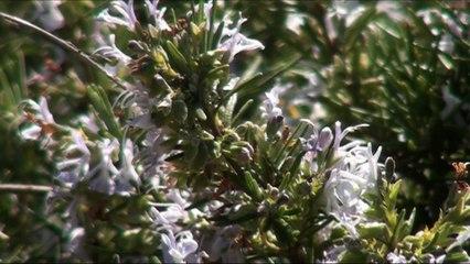 Très gros zoom sur des abeilles et un bourdon.