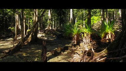 Christmas Island - Discover the Nature