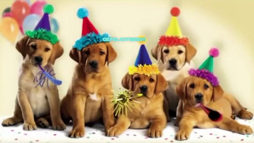 Happy Birthday from Dogs And Cats
