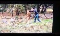 Un homme met un coup de poing à un kangourou.