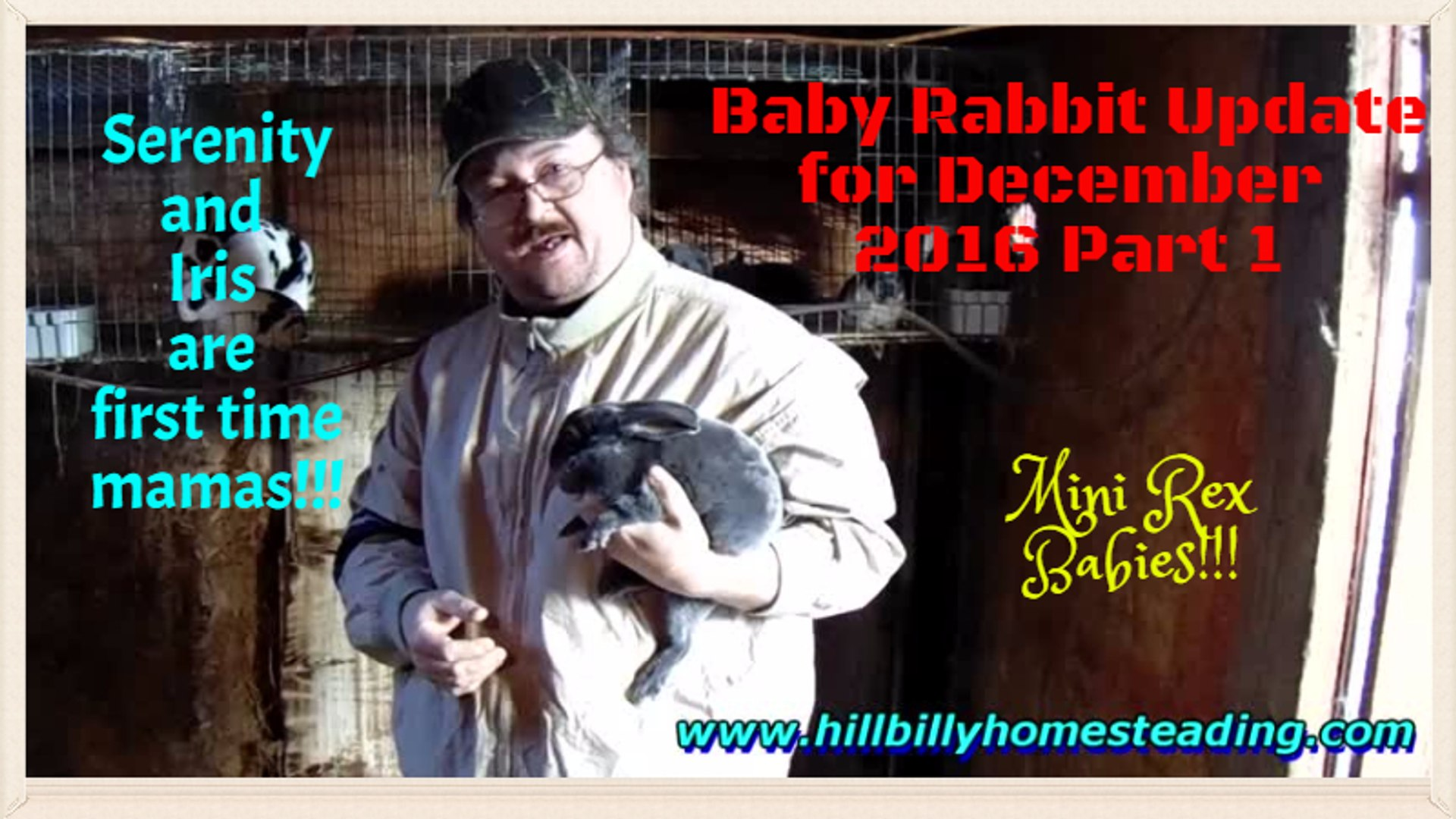 Rabbits - Baby Rabbit Update 12_1_2016 Part 1 of 2.mp4