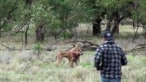 Un homme se bat contre un kangourou pour sauver son chien