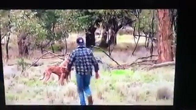 Un homme met un coup de poing à un kangourou