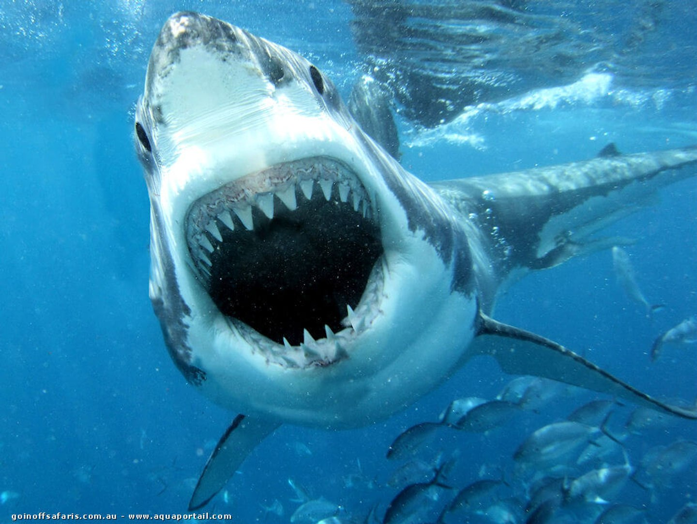 Fantomes Des Grands Fonds Requins Des Profondeurs Documentaire 2016