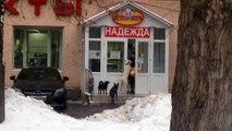 En russie même les chiens braquent les mamies à la sortie de l'épicerie!