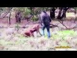 Köpeğini Yakalayan Kanguruya Yumruk Atan Adam ve Yumruğu Yiyince Seni Anneme Söyliycem Bakışı Atan Kanguru