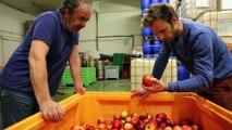 Réduction du gaspillage alimentaire en arboriculture dans les Pyrénées-Orientales