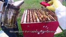 Installation et utilisation pédagogique de ruches au lycée des Andaines de la Ferté-Macé